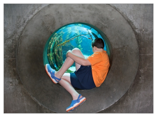 Max watching the fish through a porthole at the California Science Center June 25th 2013. Image © Joe Geronimo.
