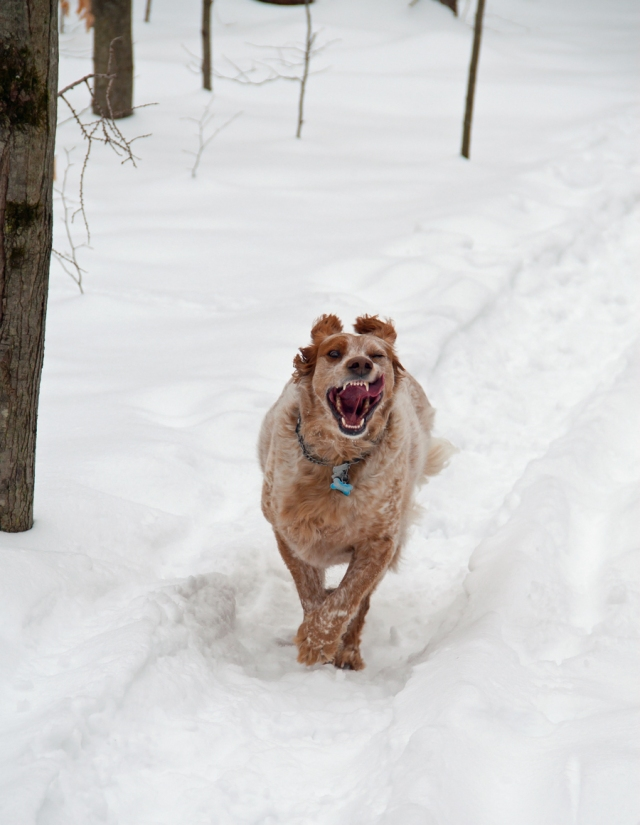 Crazy mutt enjoying the snow February 10th 2015.