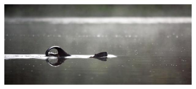 Mr. Beaver @ Long Pond © Joe Geronimo