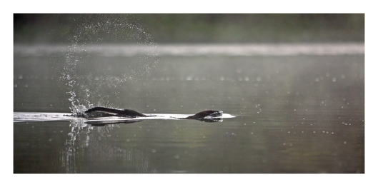 Beaver Long Pond_03SB